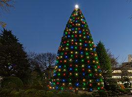 Aoyama Gakuin Aoyama Campus Christmas tree