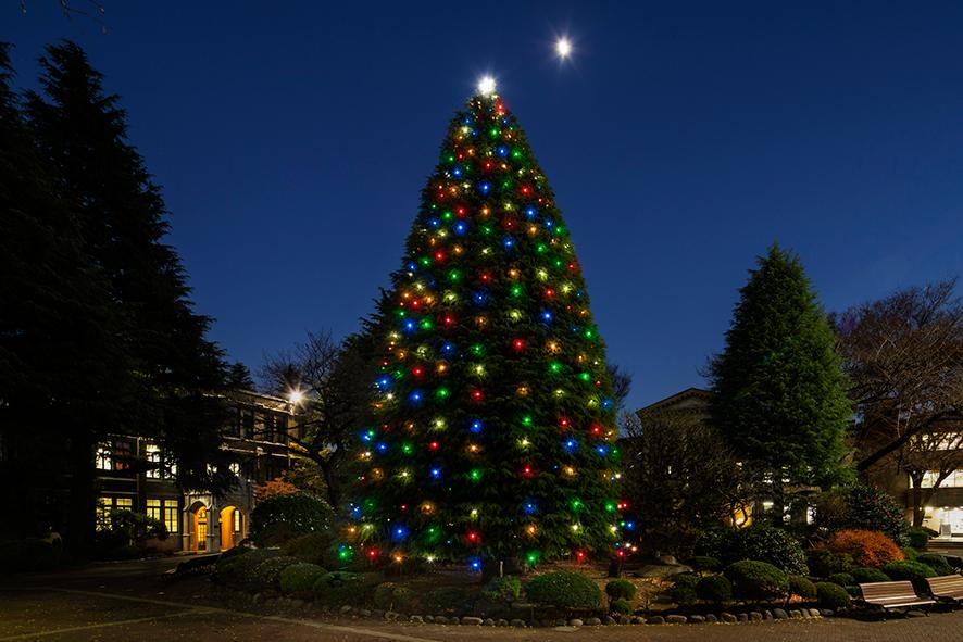 青山学院 青山キャンパス クリスマスツリー